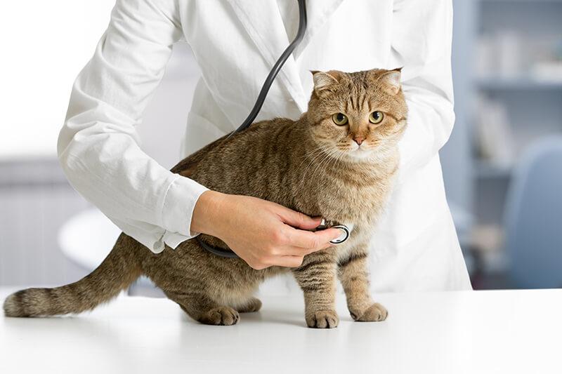 予防医療の推進